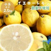 無農薬レモン国産レモン送料無料