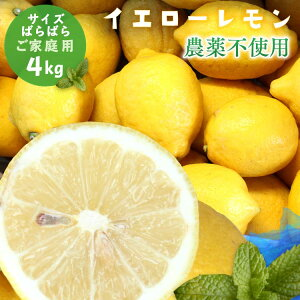 冷蔵発送 【愛媛県大三島産】農薬不使用レモン【サイズバラ4キロ】 国産レモン 4kg 訳あり ワケあり わけあり レモン れもん 訳あり ※ 無農薬 表示について「 無農薬 」「 無化学肥料 」の表示は国のガイドラインにおいて平成19年4月より表示禁止となっております。