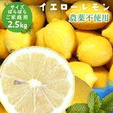 【愛媛県大三島産】農薬不使用レモン【サイズバラ2.5キロ】 国産レモン 訳あり ワケあり わけあり ※ 無農薬 表示について「 無農薬 」「 無化学肥料 」の表示は国のガイドラインにおいて平成19年4月より表示禁止となっております。