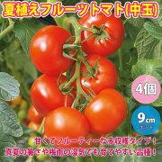 夏植えフルーツトマトの苗【9cmポット自根野菜苗お買い得4個セット】【即出荷!送料無料】