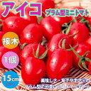 【送料無料】アイコプラム型ミニトマト【野菜苗 15cmポット接木苗/1個】ミニトマト苗 みにとまと苗