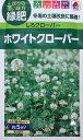 【種子】ホワイトクローバー(シロクローバー)品種名 フィア タキイ種苗のタネ
