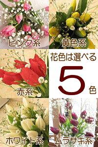 チューリップとカスミソウのふんわり花束(チューリップ20本タイプ)