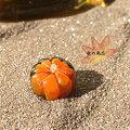 <ガラス細工ミニチュアガラス南瓜かぼちゃ収穫秋>秋のおいしい・南瓜(かぼちゃ)オレンジ<ミニチュア小物ガラス細工><ガラス細工ファニチャー>【ギフトプレゼントラッピング】