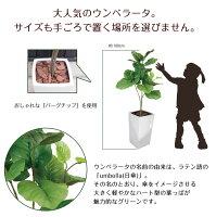 ウンベラータブランチ(SC触媒加工済み)【CT触媒】【人工樹木】【造花】