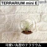 【terrariumminiE(丸型)】テラリウムミニ丸型ハンキングスクエアヴィンテージインテリア壁掛け吊るすガラス北欧雑貨小物エアプランツチランジアティランジアインテリアグリーンミニ観葉観葉植物南国リビングディスプレイ
