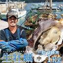 生牡蠣 殻付き 1kg 中 生食用宮城県産 漁師直送 格安生牡蠣お取り寄せ