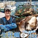 生牡蠣 殻付き 2kg 小 生食用宮城県産 漁師直送 格安生牡蠣お取り寄せ
