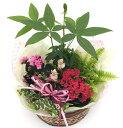 しあわせも届けたい!!花言葉は【幸福を告げる】【送料無料】幸せ花かごセット(カランコエ)...