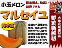 Melon-t-02