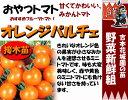 Tomato-t-04