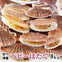 青森県むつ湾産【訳あり】活ベビーほたて8kg 2月から5月まで販売