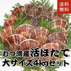 青森県むつ湾産活ほたて 大サイズ 3.5kg (14枚~16枚)