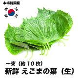 えごまの葉(生) 一束(約10枚)(エゴマ)[韓国食材] 〔韓国野菜〕お取り寄せ