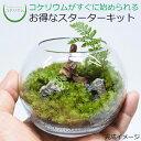 【観葉植物 おしゃれ ミニ テラリウム キット コケリウム