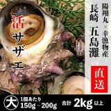 長崎県産サザエ2kg