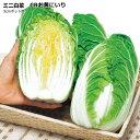 なえ屋で買える「ミニ白菜 苗 お黄にいり 9cmポット苗 ミニハクサイ 【ラッキーシール対応】」の画像です。価格は81円になります。