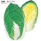 黄ごころ75白菜75