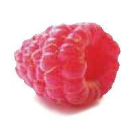 南米チリ産ラズベリー(冷凍)500g