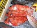 【5000円以上送料無料】【鮮魚】あらかぶ〈アラカブ〉別称:カサゴ1尾、0.3Kg〜1Kg前後