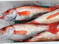 【鮮魚】赤むつ〈アカムツ〉別称:喉黒〈ノドグロ〉1匹、500g前後