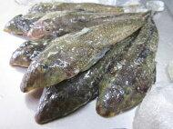 【鮮魚】メゴチ1Kg前後、16〜50尾前後