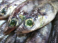 【鮮魚】目光〈メヒカリ〉1Kg前後、20〜33匹前後