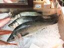 【鮮魚】鱸〈スズキ〉1匹、1Kg〜1.5Kg前後