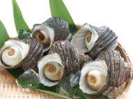 【鮮魚】栄螺〈サザエ〉中1Kg前後、5〜6個前後