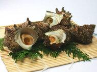 【鮮魚】栄螺〈サザエ〉大1Kg前後、3〜4個前後