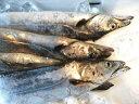 【鮮魚】太刀魚〈タチウオ〉1匹、1Kg前後