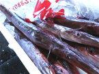 【鮮魚】ヤガラ1匹、0.5Kg〜1Kg前後