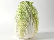 白菜〈ハクサイ〉1個、2.5Kg〜3.8Kg前後