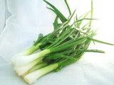 葉玉葱〈ハタマネギ〉1パック、300g前後、2〜4個前後