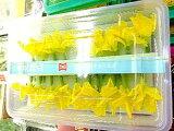 花丸胡瓜〈ハナマルキュウリ〉1ケース、10パック前後、0.5Kg〜1Kg前後