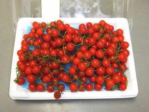 マイクロトマト〈赤〉1パック、100g前後