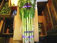 チシャトウ別称:茎レタス〈クキレタス〉1束、10本前後、1.5Kg〜2.5Kg前後