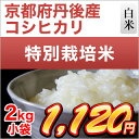 28-kyou-koshi-2