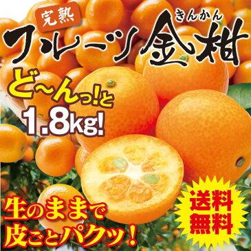 完熟 フルーツ 金柑 1.8kg 送料無料 甘い金柑 みかん 果物 国産 大嶌屋(おおしまや)