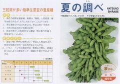【エダマメ】 サカタ 夏の調べ [春まき野菜のタネ]