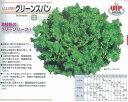【レタス】 カネコ育成 グリーンスパン [春まき野菜のタネ]