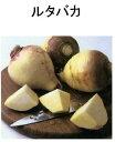 【世界の根菜】 ルタバガ
