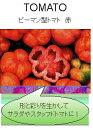 【世界の果菜】 ピーマン型トマト 赤