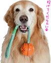 紐付きボール【犬用おもちゃ】<あす楽対応>