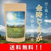 金時しょうが 粉末 100g 【送料無料】国産の金時生姜の種を無農薬栽培し、粉末加工しております。冷え性にお悩みのあなたに!純粋な金時ショウガの粉末のみを使用!