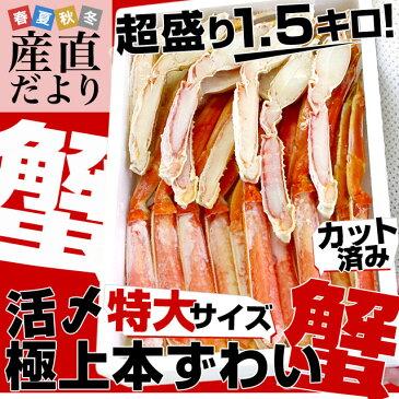 送料無料 北海道加工 活締め極上本ずわい蟹 浜ゆで極上品 カット済超盛1.5キロ (2尾分相当) ズワイガニ
