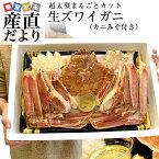 超大型の生ズワイガニ(カニみそ付) まるごと1尾 解体 約1キロ 送料無料 生ズワイ蟹 生ずわい蟹 カニ鍋 産直だより