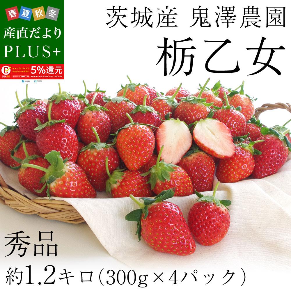 茨城県産 鬼澤農園 ステビア栽培 栃乙女 Aから3Lサイズ 300g×4パック入り 合計1.2キロ以上 いちご