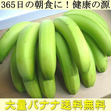 送料無料 365日の朝食に 健康の源 バナナ を大量でお届け!(他の商品と同梱不可)df