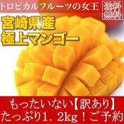 送料無料訳あり宮崎県産完熟アップルマンゴー1.2kgご予約宮崎マンゴー